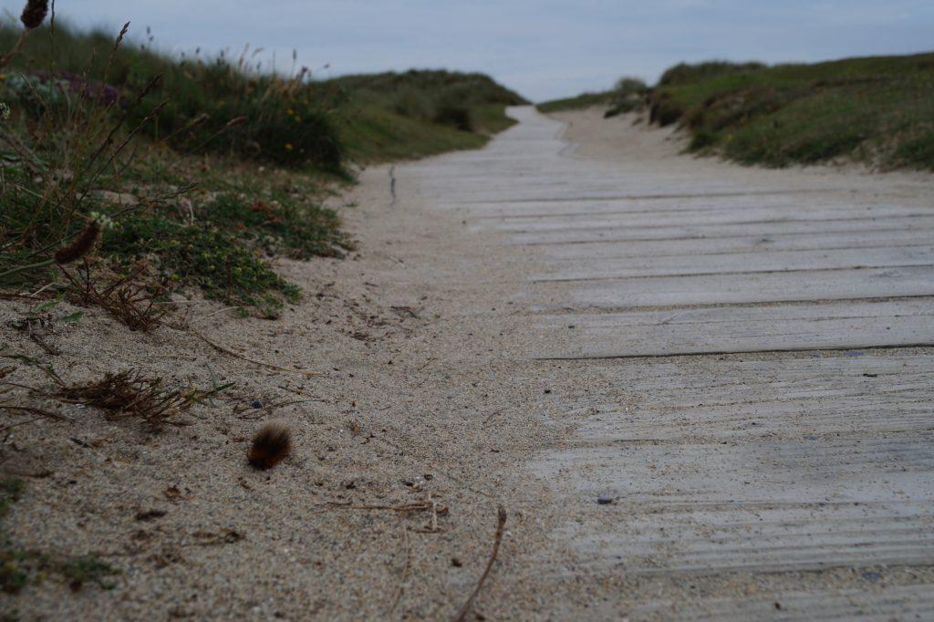 Barleycove Beach | schabakery.com