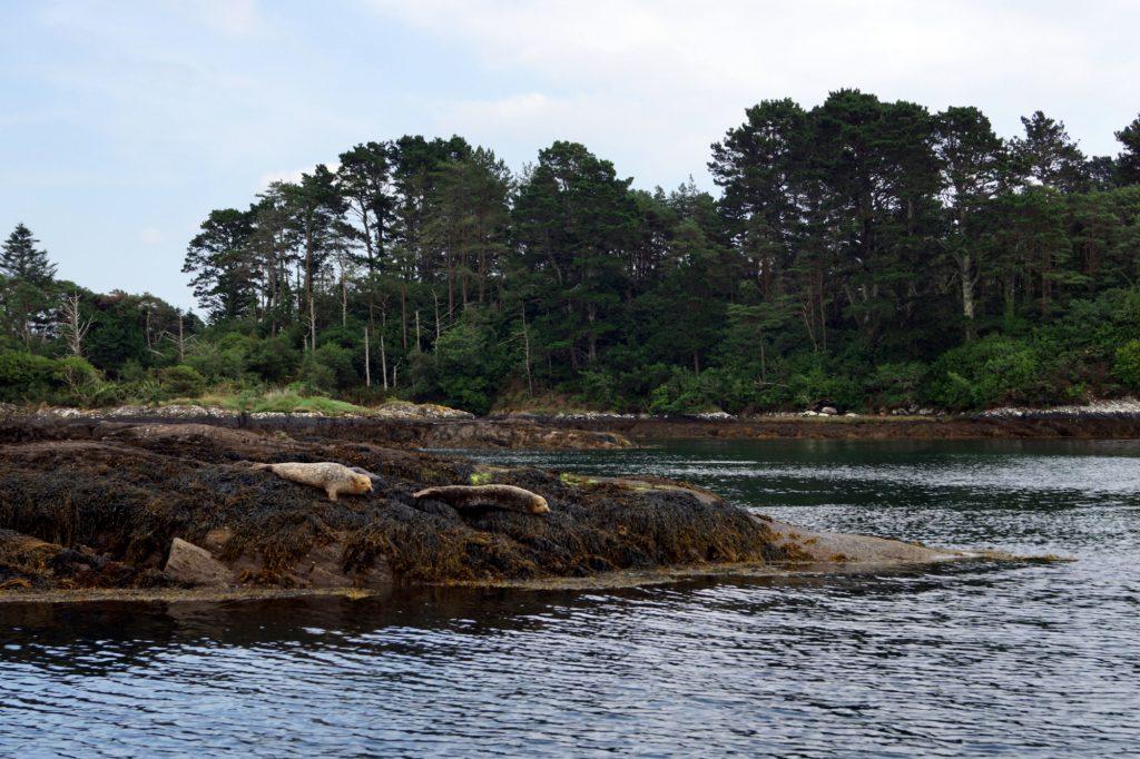 Glengarriff Bay | schabakery.com